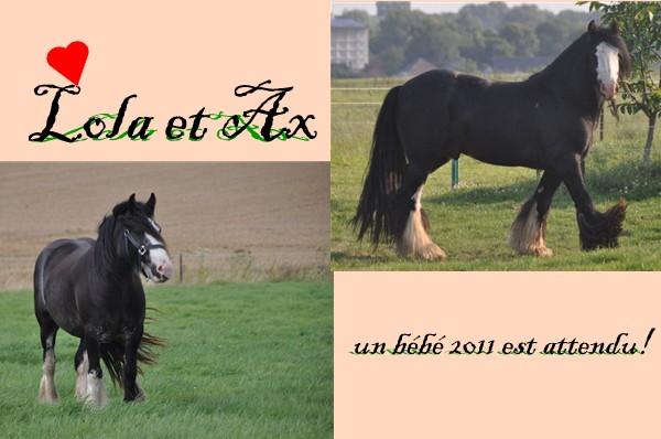 Ecurie de Tine:les faire parts de naissances 2011 Lola_e10