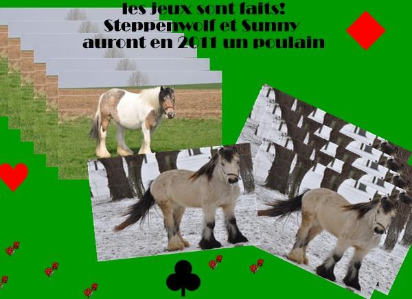 Ecurie de Tine:les faire parts de naissances 2011 Sunny_10