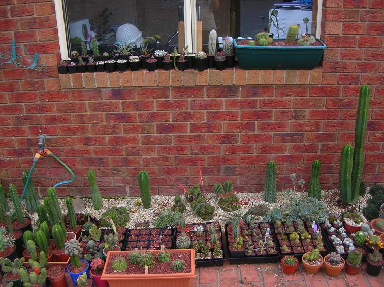 Moving house with cacti... a mini-blog - Page 2 Garden10