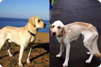 Petition pour Victor le chien labrador. Actu-f10
