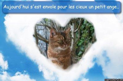 Perdu,trois chats Dept45 Petit_11