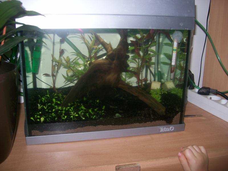 aquarium 20 litres - crevettes  101_5112
