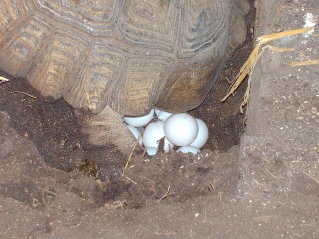 comment se présente un nid ? Image327