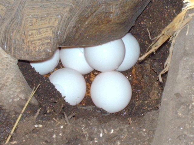 comment se présente un nid ? Image328