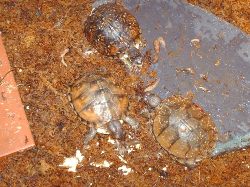 TCT : orgie de petites limaces grises Images83