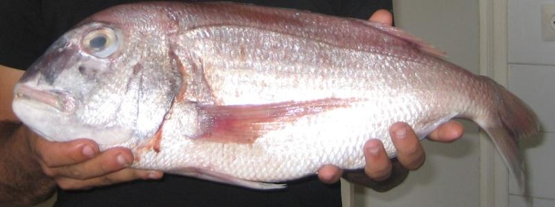dellys et ses poissons 11111110
