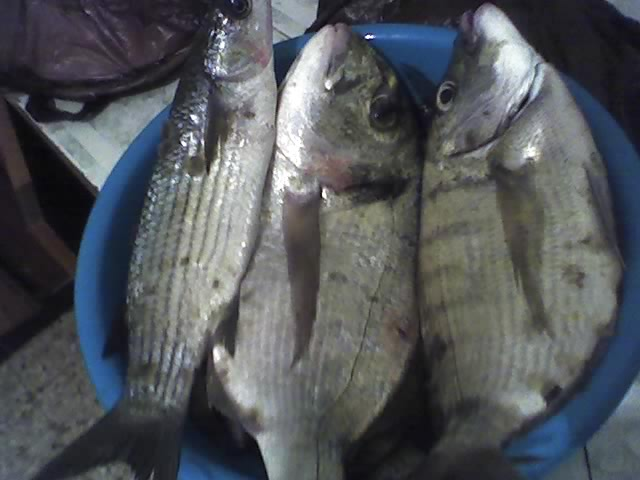 dellys et ses poissons 24080711