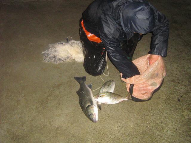 dellys et ses poissons Mesdoc10