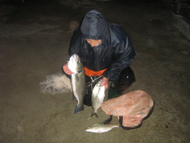 dellys et ses poissons Mesdoc11