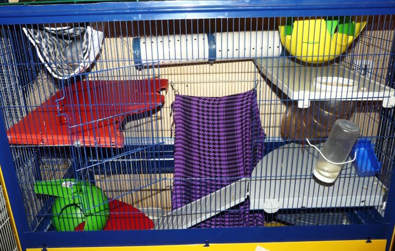 Photos de vos cages P1110110