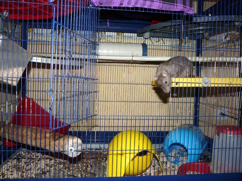 Photos de vos cages P1110111