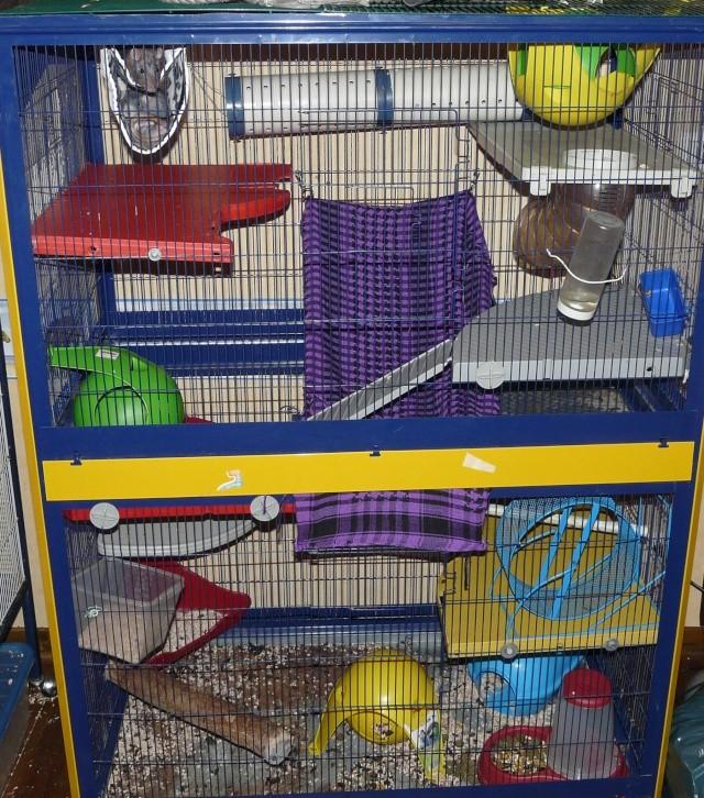 Photos de vos cages P1110112