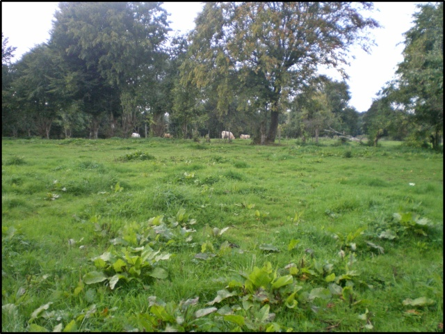 l'herbe à la fin de l'ete^^^^ Imgp7511
