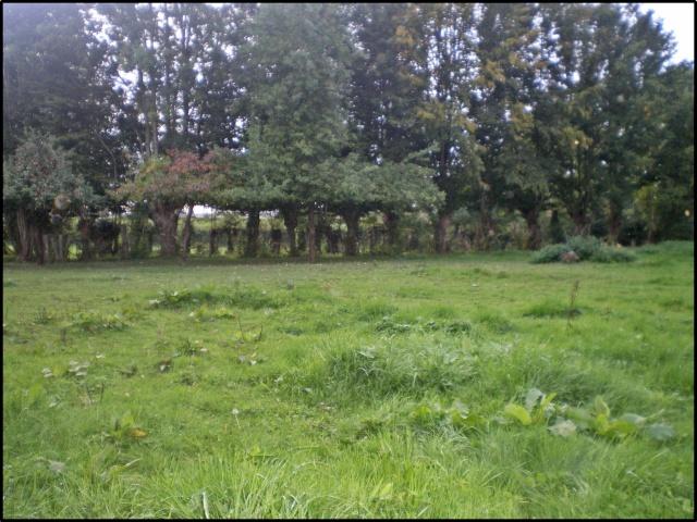 l'herbe à la fin de l'ete^^^^ Imgp7512