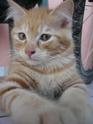 Mon chat 43135710