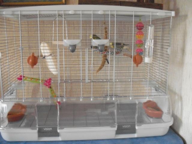 Nouvelle cage :) Dscf1911