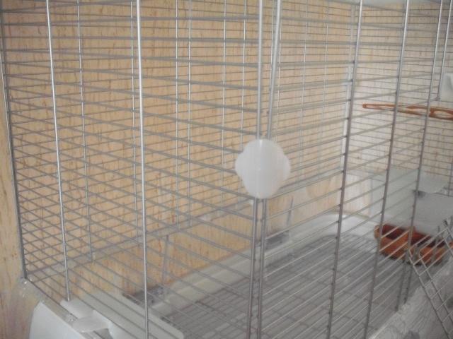 Nouvelle cage :) Dscf1912