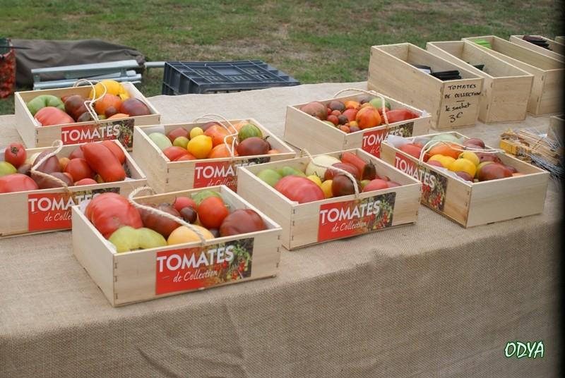 tomates et cie 2010_065