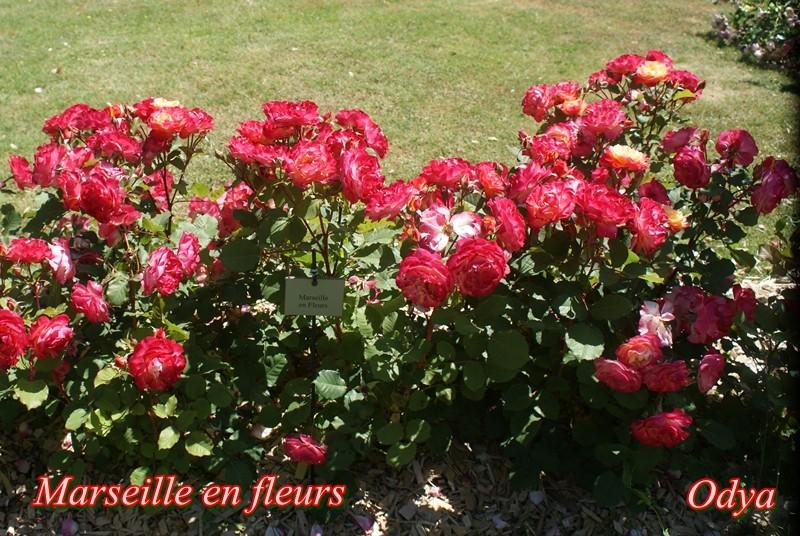 Parc Foulon . Doué la Fontaine   49 Dsc02710