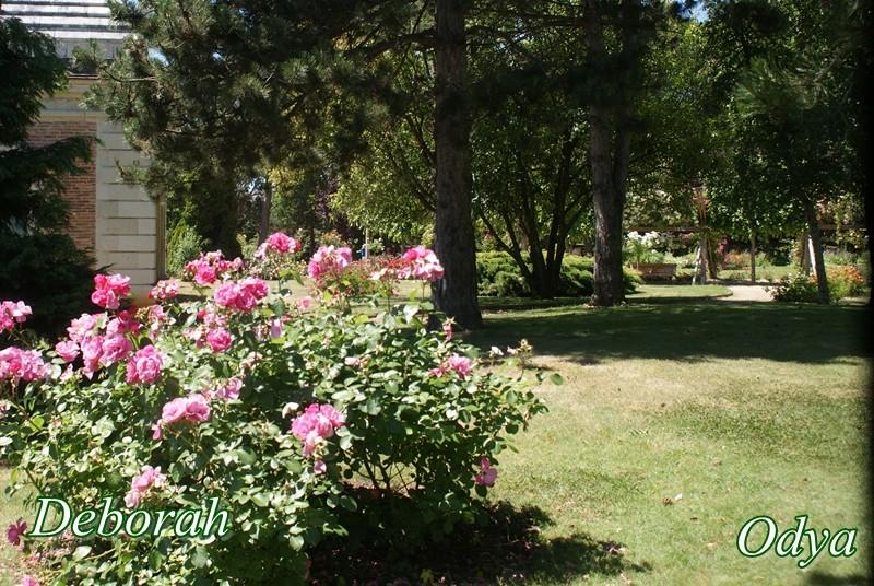 Parc Foulon . Doué la Fontaine   49 Dsc02714