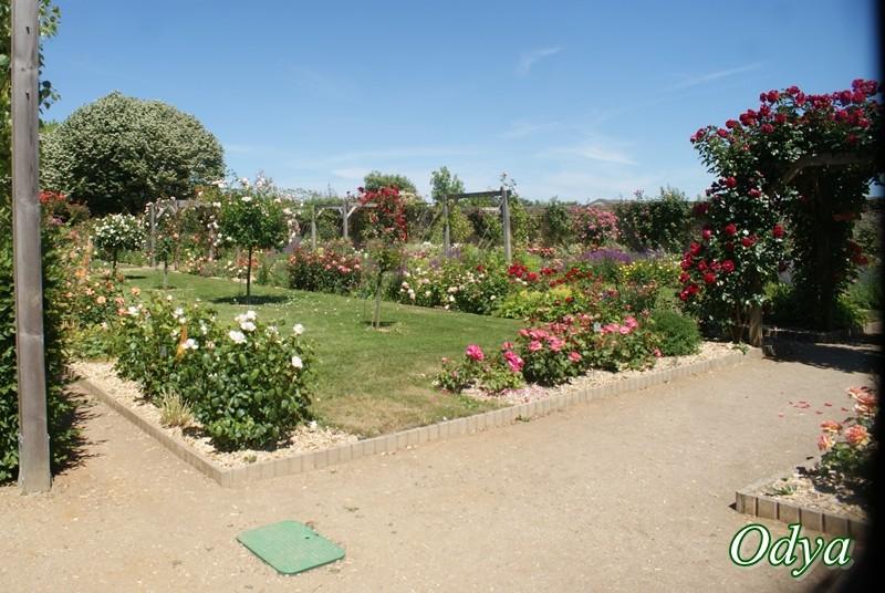 Parc Foulon . Doué la Fontaine   49 Dsc02720