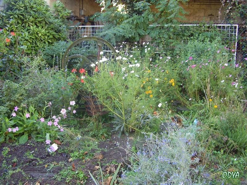 Recherche d'idées : plantes hautes pour l'ombre   Pa170014