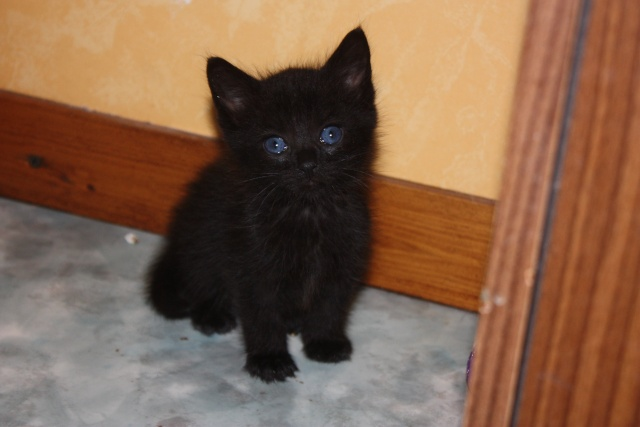 besoin d'une asso pour ces 5 chatons Img_1056
