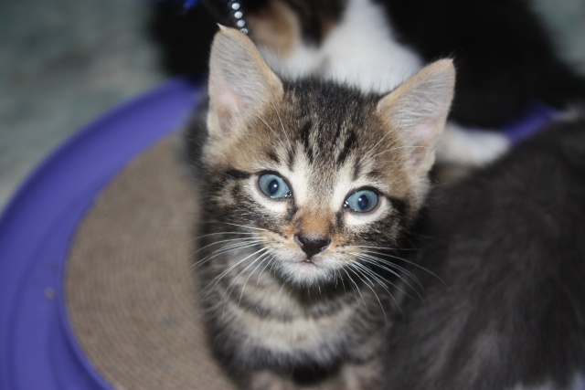 besoin d'une asso pour ces 5 chatons Img_1057