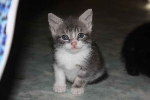 besoin d'une asso pour ces 5 chatons Img_1059