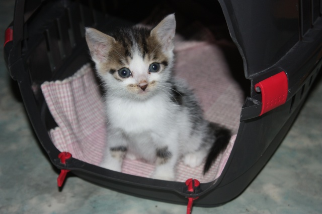 besoin d'une asso pour ces 5 chatons Img_1060