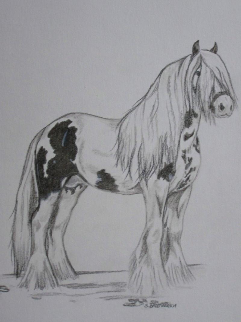animaux:dessin,pyrogravure, peinture tissus, porcelaine etc.. 100_1411