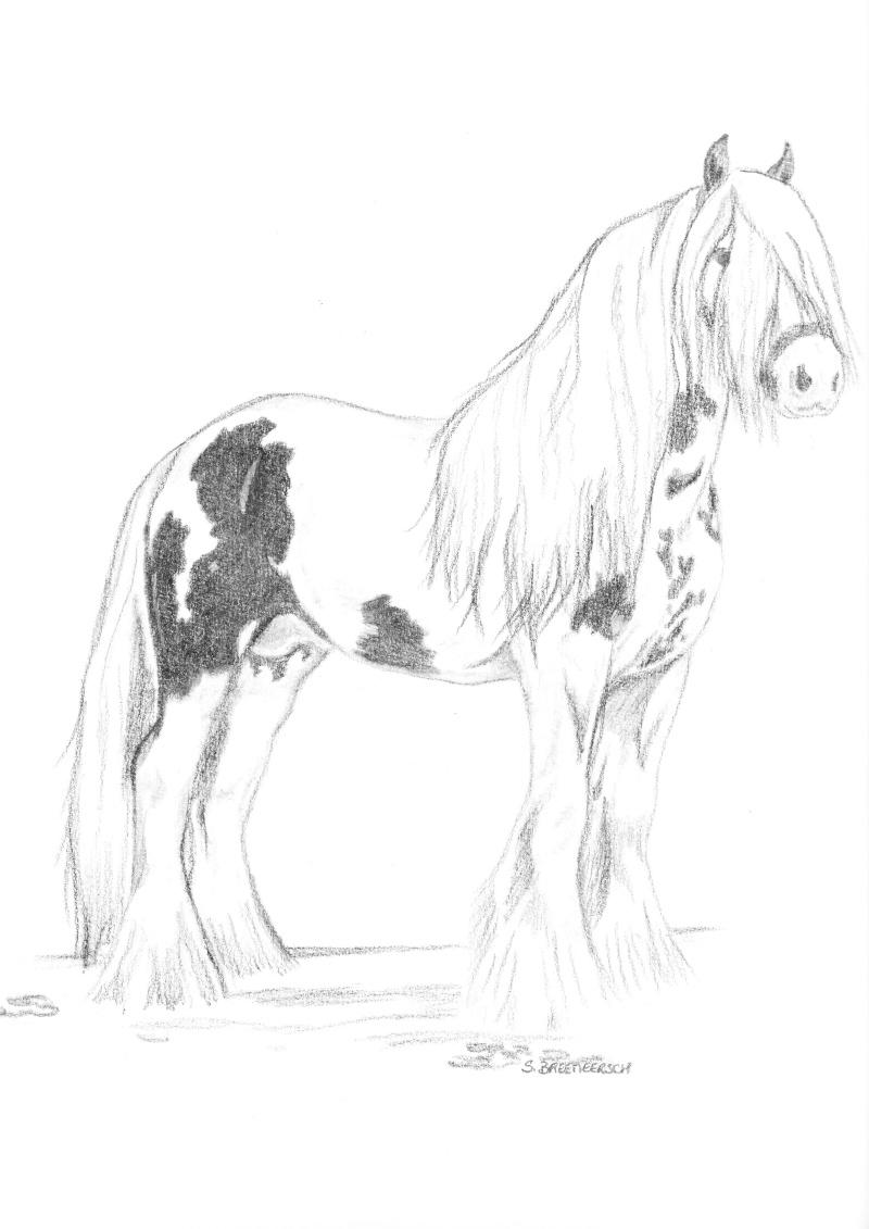 animaux:dessin,pyrogravure, peinture tissus, porcelaine etc.. Img10