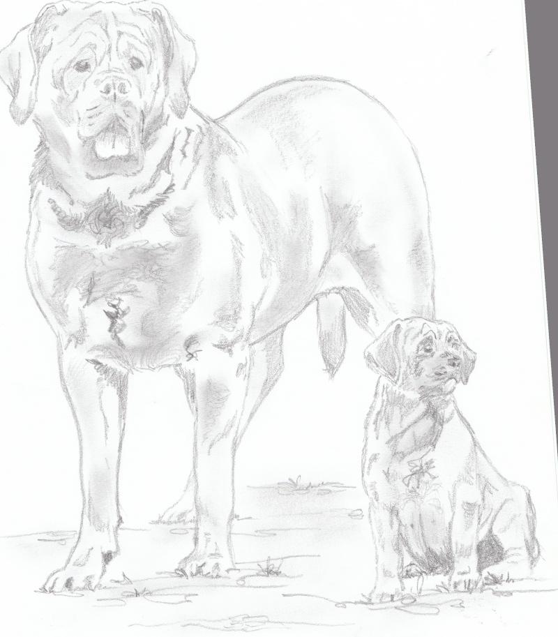 animaux:dessin,pyrogravure, peinture tissus, porcelaine etc.. Img_0011