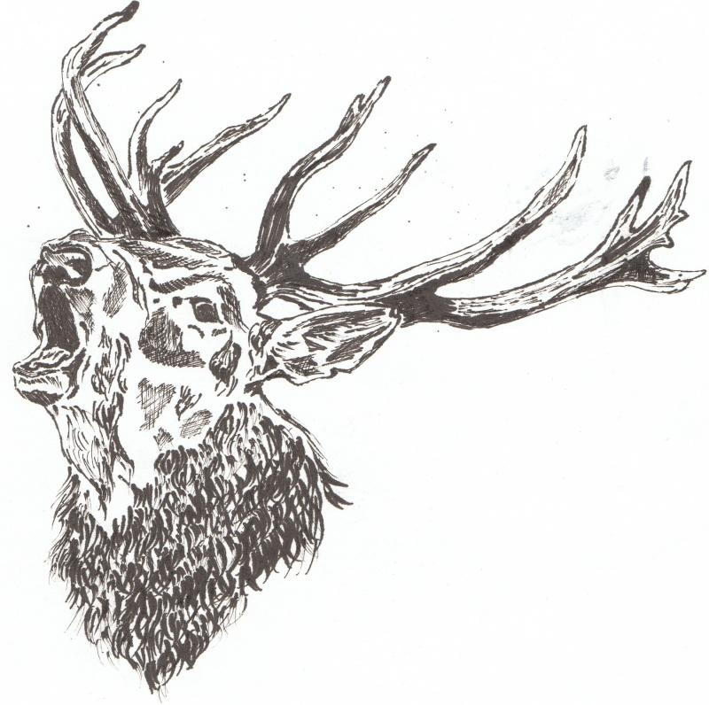 animaux:dessin,pyrogravure, peinture tissus, porcelaine etc.. Img_0012