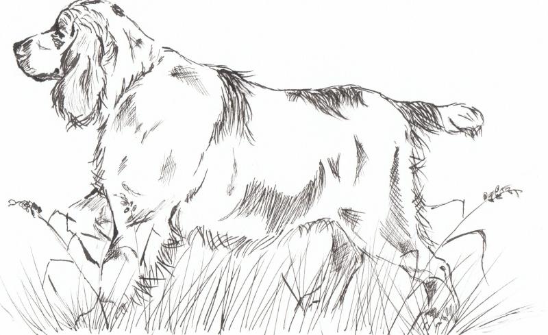 animaux:dessin,pyrogravure, peinture tissus, porcelaine etc.. Img_0013