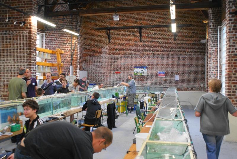 Bourse dans le Nord (Orchies) le 5 juin 2011  - Page 6 Dsc04858