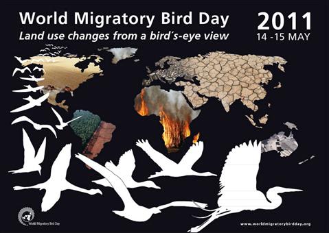 Journée Mondiale des Oiseaux Migrateurs 2011 (14 & 15 mai) Migrat10