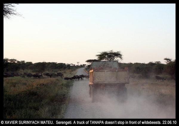 Ou quand la croissance démographique menace la faune sauvage...  Sereng10