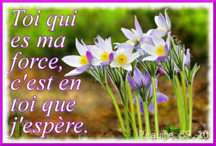 Nous prouverons notre amour pour Dieu et notre fidélité à Dieu en faisant ce qui lui est agréable Force_12