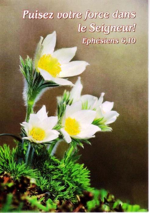Nous prouverons notre amour pour Dieu et notre fidélité à Dieu en faisant ce qui lui est agréable Force_14