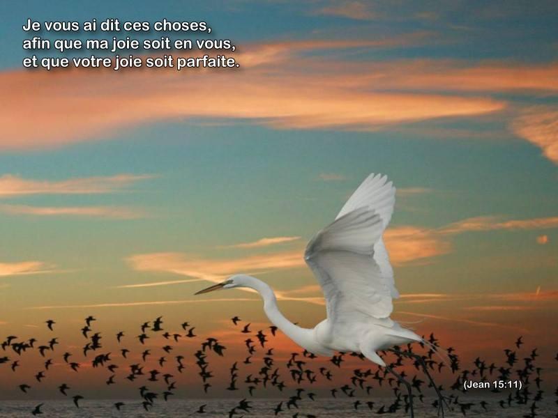 La vie est faite de choix Joie7610