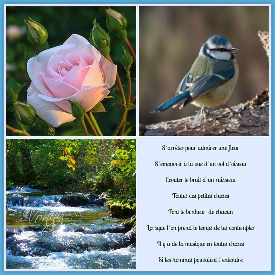 La vie est faite de choix Nature10
