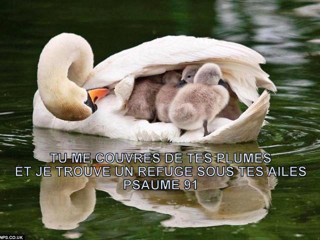 Notre espérance en Christ pour l'avenir est le motif et la base de notre joie sur la terre. Refuge10