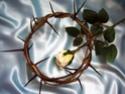 La Bible considère la souffrance, dans un monde que Dieu a créé bon, comme une intrusion. __357e11