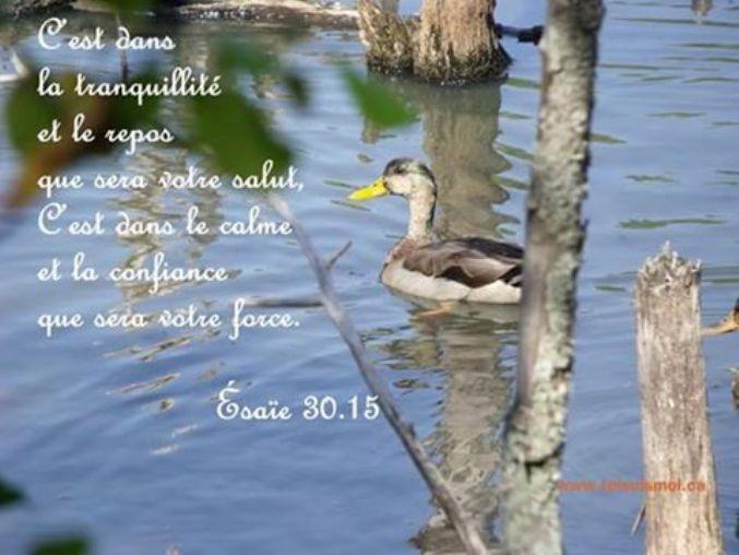 Notre espérance en Christ pour l'avenir est le motif et la base de notre joie sur la terre. Tranqu10