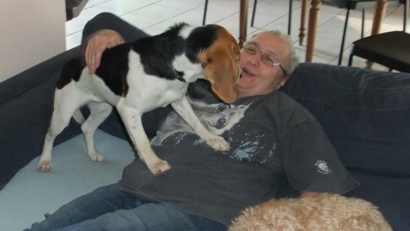 ETOILE, beagle femelle, 1 an 1/2 (07) Divers11