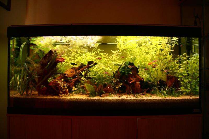 Aquatlantis 240 litres l'histoire continnue... - Page 6 Img_8610