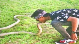 Cobra bijt baas dood, familie gelooft in wederopstanding Cobrak10