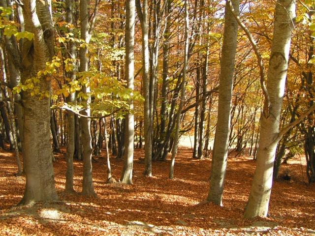 l'automne express Pict3110
