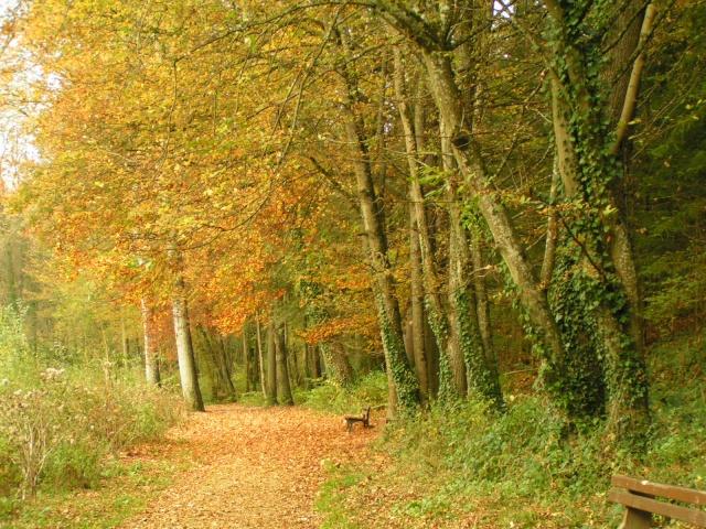 l'automne express Pict4210